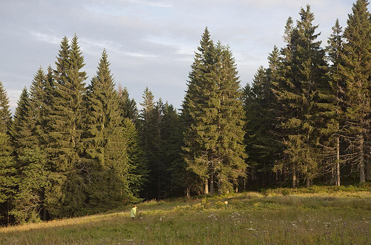 Intervence do lesního prostoru / Intervention to the forest space